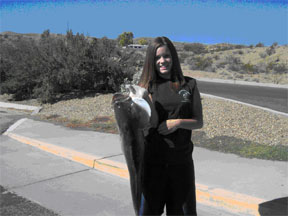 Nevadadventures fishing up date page for Fishing lake mead from shore