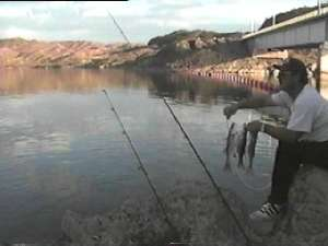 Nevadadventures southern region fishing map counties of for Lake mohave fishing
